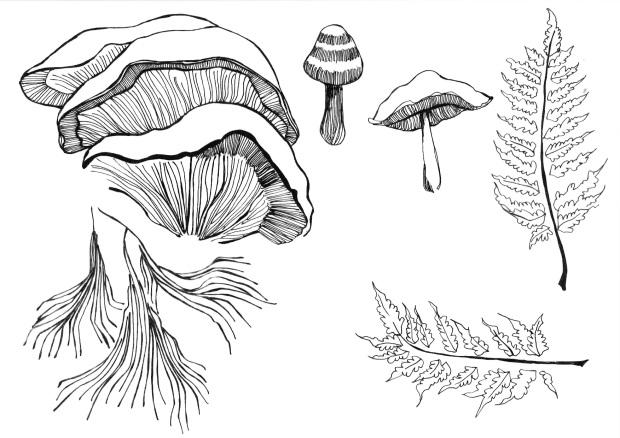 Amelia Taylor mushroom illustration